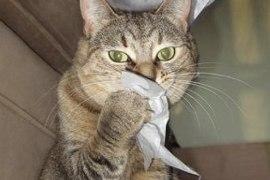 Kihanje mačk
